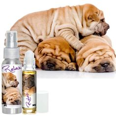 RELAX Dog Aromatherapy Chinese Shar-Pei Stress Relief…Naturally