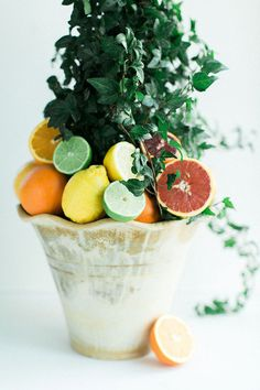 Hometalk :: DIY Citrus Topiary