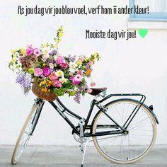 Pretty flowers in a vintage beach cruiser bike basket. Striped Prom Dresses, Fleur Orange, Bike Photography, Bike Art, Vintage Bicycles, Pet Accessories, Scentsy, Pretty Flowers, Flower Arrangements