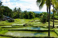 East Timor (by Farin Urlaub)