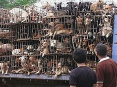 A truck loaded with dogs intended for the meat trade was intercepted by the Soi Dog Foundation.  Help stop the illegal Dog meat trade in China, Thailand, South Korea, Vietnam, and Laos...PLEASE