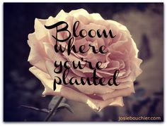 Bloom where you're planted @Josie Bouchier