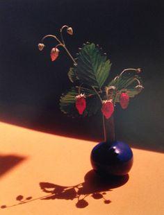 """Strawberry in Blue Vase"" © Horst P. Horst / Staley-Wise Gallery New York"