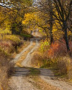 *An old dirt road in autumn (no location given) by Susie Swanson 🍂cr. The Road, Back Road, Country Farm, Country Roads, Country Living, Country Life, Road Painting, Road Trip Essentials, Country Scenes