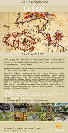 https://flic.kr/p/24wfQBW | Viaggio a Lesbo - Aprile 2018 | Viaggio fotonaturalistico all'isola di Lesbo 15 - 20 Aprile 2018
