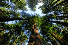 would love to visit the redwood