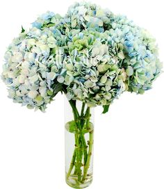 blue antique hydrangeas; one of my favorite things.