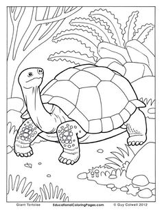 Owen And Mzee Coloring Pages