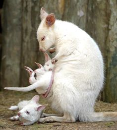 Pale menagerie | Albino animals | News.com.au