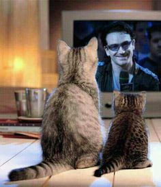 U2/Bono - Even the cats love him!