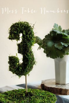DIY moss table numbers! they look kinda cool, but i wonder if i could spin these a bit differently? hmm...