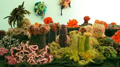 crochet coral reef smithsonian - Google Search