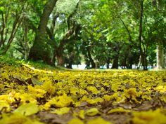 Primavera na Redenção - Porto Alegre