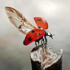 Ladybug!