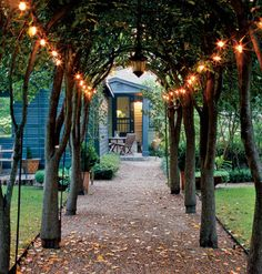 Ten flowering pear trees were coaxed over a metal arch to make this striking garden allée.