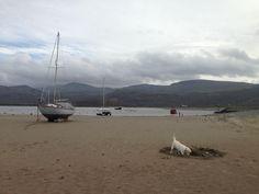 Beach & Tarq