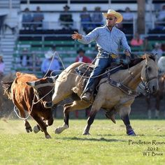 steer tripping Cowboy Art, Cowboy And Cowgirl, Team Roper, Rodeo Events, Rodeo Time, Horse And Human, Rodeo Cowboys, Riding Horses, Western Riding