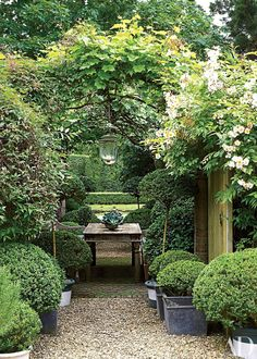 Outdoor seating area with boxwood planters and pergola with vines.