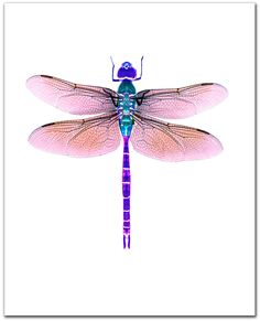 Dragonfly art,  Giclee print. 8 x 10. violet. purple. Dragonfly watercolor painting. Original design.  Archival print. Dragonfly art.. $25.00, via Etsy.