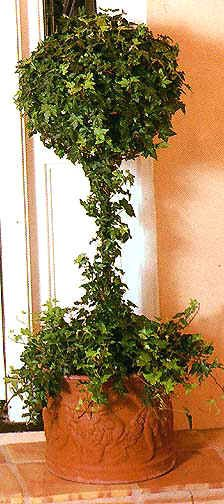 Topiaries Made From English Ivy by Pam Murdock