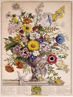 November. From: The Twelve Months of Flowers. Pieter Casteels (1730-1731).