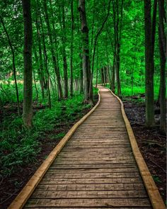 This secret forest boardwalk is just two hours from Toronto (London, ON)