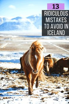 13 Rookie Mistakes to Avoid When Traveling to Iceland Iceland Travel Tips, Europe Travel Guide, Travel Guides, Travel Destinations, Travelling Europe, Travel Packing, Solo Travel, Budget Travel, Box Regalo