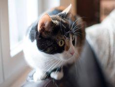 Les chats sont souvent victimes d'accidents de voitures. Découvrez les premiers gestes à avoir en attendant le vétérinaire : http://fr.yummypets.com/wellbeing/article/51325-chat-renverse-par-une-voiture-comment-reagir #chat #accident #conseil #animaux #sauvetage