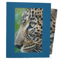 SoulCollage® Card Frame | Hanford Mead Publishers, Inc.