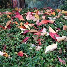 Fall in California💛
