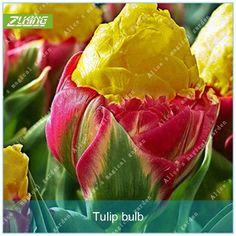 ZLKING 2pcs True Tulip Bulbs Bonsai Flower Bulbs Ice Cream As Beautiful Tulips Rizomas Bulbos Aroma Potted Plant Bonsai Seeds