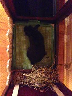Our Bunny House/Hutch