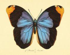 Mariposa naranja impresión cartel naturaleza por AntiqueWallArt