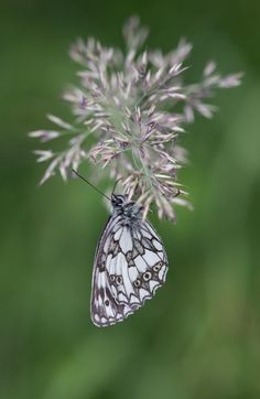 Butterfly by Nadia Bordignon on 500px