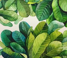 Stunning colours, these vibrant greens are so calming Large Artwork, Watercolor Plants, Natural World, Plant Leaves, Flora, Vibrant, Colours, Illustration, Green