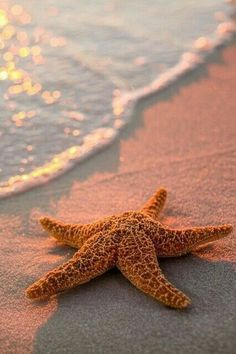 cute starfish near the shore