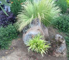 Combination of colors and plants and rocks (not the bare ground though)