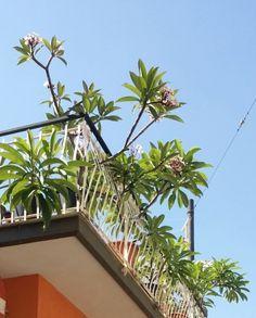 I balconi di Riposto
