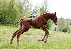FWB - varsa Warmblood Horses, Animals, Animales, Animaux, Animal, Animais
