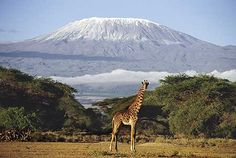 wanted to climb this in the past, but now will settle on just seeing it live  {kilimanjaro}