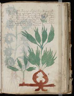Trọn bộ Bản thảo Voynich, cuốn sách bí ẩn nhất thế giới