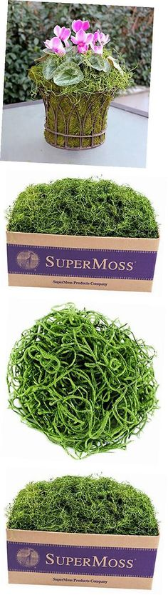 Swags and Garlands 28130: Supermoss (26927) Spanish Moss Preserved, Grass, 3Lbs -> BUY IT NOW ONLY: $57.73 on eBay!
