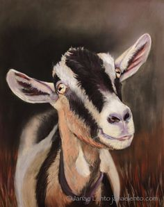 4 Cards with Envelope Male Alpine Goat by JanaeLehtoFineArt, $8.99