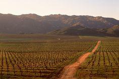 Valle de Guadalupe. Mexico  Zonas vinícolas