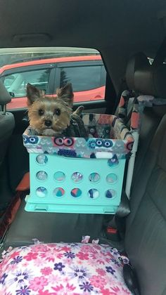 """Welcome to my """"Yorkie Nest""""! I am a proud Yorkie mom to Carli, Muffy and Lacey.yes, I LOVE Yorkies! I Love Dogs, Cute Dogs, Top Dog Breeds, Dog Car Seats, Lap Dogs, Working Dogs, Training Your Dog, Little Dogs, Yorkshire Terrier"""