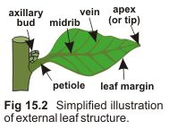 leaf structure.gif (189×144)