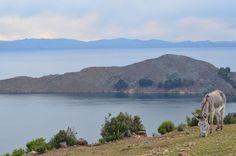 Premier pays d'Amerique Latine du classement, et directement intégré dans le Top 5 avec 64% de passages, la Bolivie qui abrite le lac le plus haut du monde (le lac Titicaca) vous assurera des paysages à couper le souffle à un prix très modéré ! Un de mes pays coup de coeur en Amerique Latine.