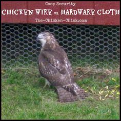 There is a big difference between chicken wire and hardware cloth. I now understand that chicken wire is intended to keep chickens confined to an area, not to prevent predators from reaching chickens. Chicken Chick, Chicken Runs, Chicken Wire, Chicken Lady, Chicken Ideas, Backyard Chicken Coops, Backyard Farming, Chickens Backyard, Backyard Ideas