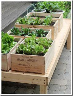 """Diy Small Space Vegetable Garden Wine Box Garden Veggie Garden Tiered Gardens And Pots For Small Balconies And Gardens Above Diy Vertical Box Planter Garden Garden Planter Boxes Vertical My … Read More """"Small Garden Boxes"""""""