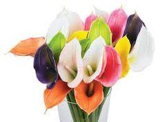 Calla Lilies -- My Favorite